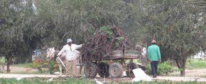 חוות סקם, מצרים